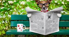 43517967 - jack russell  dog reading a newspaper or magazine sitting on a bench at the park, relaxing and having a cup of tea or coffee